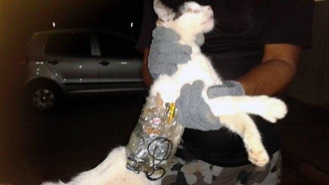 "Atrapan a ""gato contrabandista"""