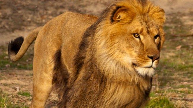 León mata a una mujer de 24 años