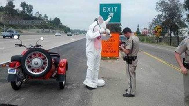 Policía da un alto al conejo de Pascua