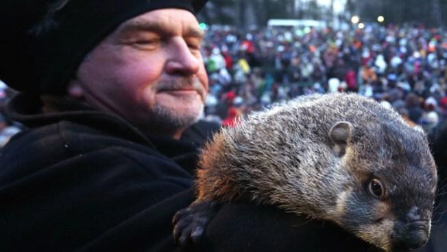 Piden la muerte de famosa marmota