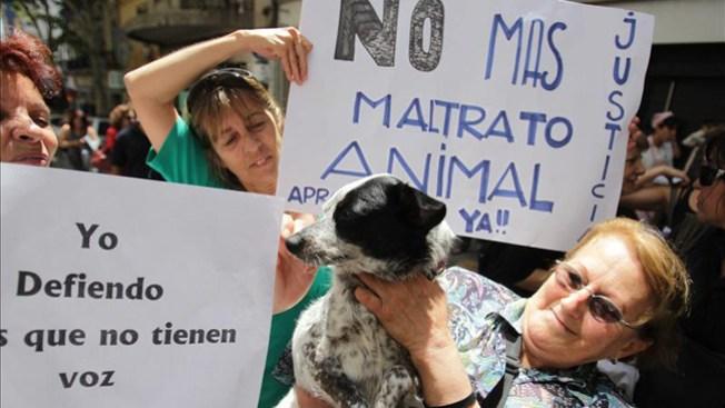Denuncian salvaje muerte de perro