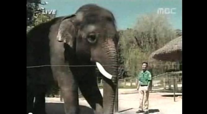 Elefante habla en coreano