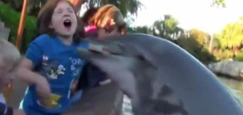 Delfín muerde a una niña